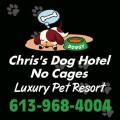 Doggy Spa Lounge